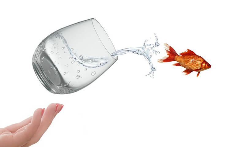 fish jumping out of water