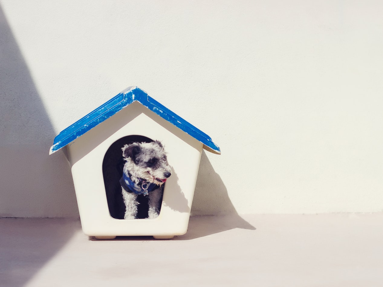 dog in a dog house